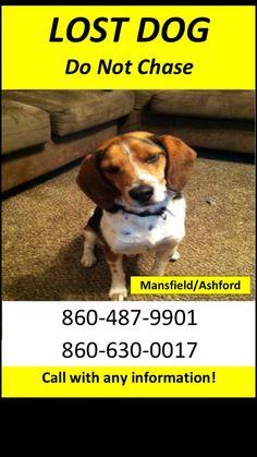 REUNITED!! Found at Eastford ACO.   Lost Mansfield/Ashford CT