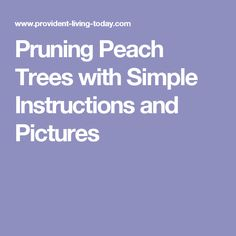 Pruning Peach Trees with Simple Instructions and Pictures