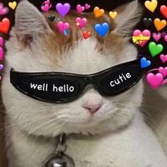 memes to send to your crush funny * memes to send to your crush ` memes to send to your crush freaky ` memes to send to your crush funny ` memes to send to your crush cute 9gag Funny, Funny Cats, Funny Animals, Cute Animals, Funny Memes, Memes Humor, Cats Humor, Dog Memes, Funny Videos