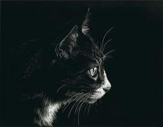 Silent Stare by Heather A. Mitchell, Scratchboard, 11 x 14 Black Paper Drawing, Scratchboard Art, Scratch Art, Black White Art, White Charcoal, Ppr, Paper Artwork, Cat Art, Animal Drawings