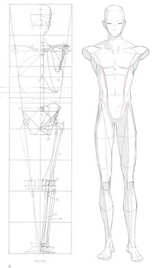 2016-04-23 front anatomy 004