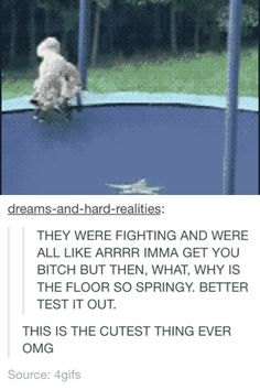 Grrr...wait why is the floor so springy Cute Funny Animals, Funny Cute, The Funny, Hilarious, Funny Memes, Stupid Funny, Funny Sayings, Jokes, Trampolines