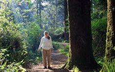 Walking through the Redwoods at Harris Beach State Park, near Brookings, Oregon Brookings Oregon, San Francisco Travel, Pikes Peak, Oregon Coast, Tent Camping, Northern California, Pacific Northwest, Summer 2015, Newport