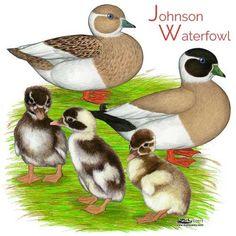 19 Best Call ducks images in 2017 | Birds, Animals, Duck house