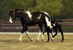 Sims 3 Foals | Paint Horse Breeding Program