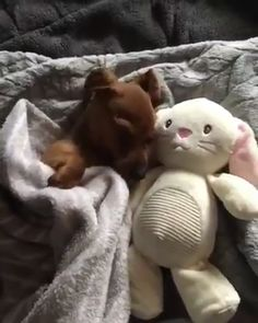 Pup snuggling up with his teddy – DJB - Baby Animals Cute Animal Videos, Funny Animal Pictures, Cute Funny Animals, Cute Baby Animals, Funny Dogs, Animals And Pets, Cute Puppies, Cute Dogs, Dogs And Puppies