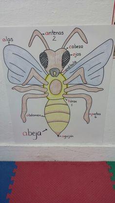 La abeja y sus partes.