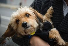 Whether it's your Instagram feed or Pinterest board, these days it's all about the photos. And as we all know, us humans love nothing more than browsing pics of pups and (for some people…) their feline friends. For rescue dogs, a cute photo can actually have a huge impact on their future – and can …
