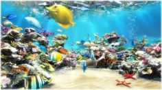 Live Aquarium Wallpaper For Windows 8 \u2013 Aquarium Image Idea \u2013 Just