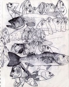 contour lines fish - Google Search
