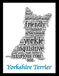 Yorkshire Terrier Art Illustration Artwork on Etsy, $20.00