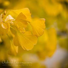 Autumn Colour | Astrid Erasmuson Photography
