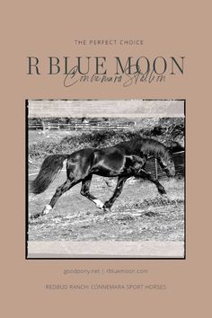 Join our Newsletter for Best Available Pricing towards the 2020 Season. Alfred Munnings, Connemara Pony, Riding Lessons, Doormats, Horse Art, Blue Moon, Dressage, Ponies, Girly Things