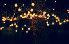 lights hanging in a tree