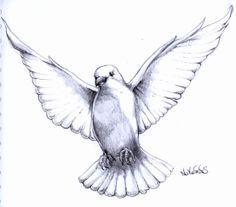 pencil drawing pigeon fly - Google zoeken