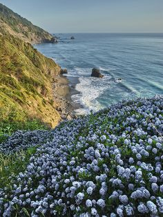 California from Crescent Beach. Del Norte Coastal Redwoods.