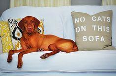 Shutter Dog Creative   dog photography