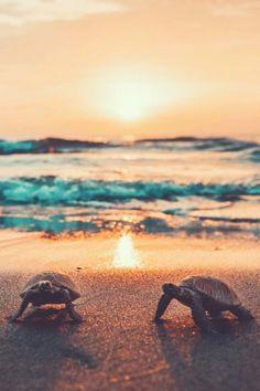 beach sunsets plus baby sea turtles Ocean Wallpaper, Cute Wallpaper Backgrounds, Animal Wallpaper, Sea Turtle Wallpaper, Underwater Wallpaper, Iphone Wallpaper, Baby Animals Pictures, Cute Animal Pictures, Cute Little Animals