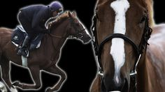 Horse racing slow motion from Earth Unplugged Horse Animation, Best Short Films, Horse Galloping, Horse Anatomy, Horse Videos, Racehorse, Animation Reference, Animal Rights, Horse Riding