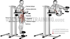 Weighted captains chair leg and hip raise. A compound exercise. Synergistic muscles: Internal and External Obliques Iliopsoas Tensor Fasciae Latae Sartorius Pectineus Adductor Longus and Adductor Brevis. Fascia Stretching, Dynamic Stretching, Squat Workout, Gym Workouts, Chair Workout, Workout Routines, Tensor Fasciae Latae, Best Chest Workout, Bodybuilding Workouts