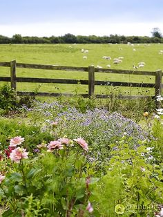 A peaceful photograph of Nature's soothing, calming effect... (Sheep are grazing in the field beyond the fence.)