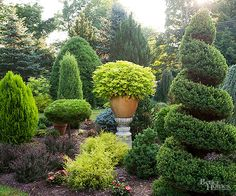 Evergreens add color and beauty to your landscape all year long.  These easy-care shrubs and trees come in an almost unlimited selection of sizes, shapes, and colors, and work well as ground covers, screens, foundation plants
