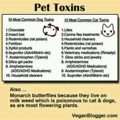 Pet treats vs vet visit