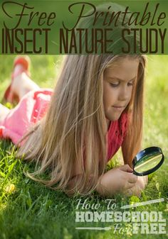 Free Printables to go with your #homeschool Insect Study!