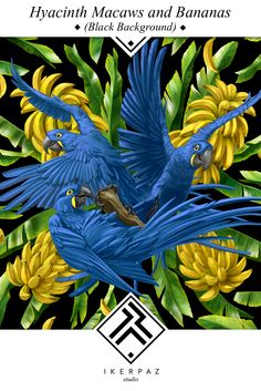 Hyacinth Macaws and bananas on black background. Illustration by Iker Paz.