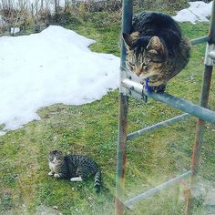 Cat Pose, Small Cat, Spring Is Here, Anxious, Big Cats, Cat Day, Awkward, Finland, Cats Of Instagram