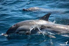 Wale und Delfine Foto-Galerie - Wale und Delfine in der Straße von Gibraltar