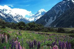 Place I would like to visit again! New Zealand- Milford Sound Highway