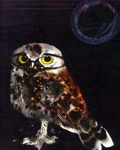 My Animals by Mirko Hanak My Animal, Owl, Birds, Pictures, Animals, Photos, Animales, Animaux, Owls