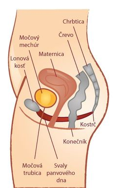 Pelvic Floor, Reflexology, Tantra, Health Fitness, Healing, Exercise, Workout, How To Plan, Life