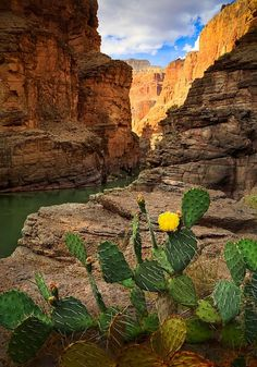 Prickly Pear cactus - at the mouth of Havasu Canyon, Grand Canyon National Park, Arizona. photo by Inge Johnsson All Nature, Amazing Nature, Beautiful World, Beautiful Places, Wonderful Places, Landscape Photography, Nature Photography, Photography Tips, Cactus Photography