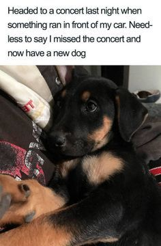 27 Dog Memes For When You Need That Daily Cute Fix Funny memes that GET IT and want you to too. Get the latest funniest memes and keep up what is going on in the memeosphere. Cute Little Animals, Cute Funny Animals, Little Dogs, Funny Cute, Funny Dog Memes, Funny Animal Memes, Funniest Memes, Meme Meme, Funny Sarcasm