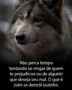 112 Melhores Imagens De Frases De Lobos Frases Fortes