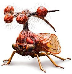 "This is the Brazilian Treehopper, or Bocydium globulare - a real living insect, which only pretends to be an alien helicopter. Its other name is ""The Bell Bearer""; the ""Globulare"" part of its Latin moniker stands for these utterly bizarre spheroids on the top (they are not antennae!)."