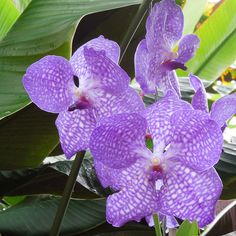 zimmerpflanzen sch ne dekoideen orchidee pflege terrarium. Black Bedroom Furniture Sets. Home Design Ideas