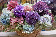 Lovely hydrangea from Cottage Garden Hortensia Hydrangea, Hydrangea Colors, Hydrangea Garden, Hydrangea Flower, Flower Petals, Flower Bouquets, Arrangements D'hortensia, Hydrangea Not Blooming, Flower Power