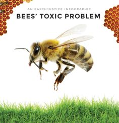 Infographic: Bees' Toxic Problem.