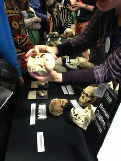 Brenna Hassett @brennawalks  twitpic.com/az71pj we are uncovering some serious science #su2012