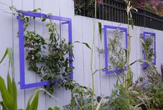 These windows-like trellis designs are created by professionals to have a mixture of modern craft and natural beauty together. The square shaped metal frames with green vine plants in it and the wonderful white color painted house wall seem delightful and eye-catching as shown in the picture given below.