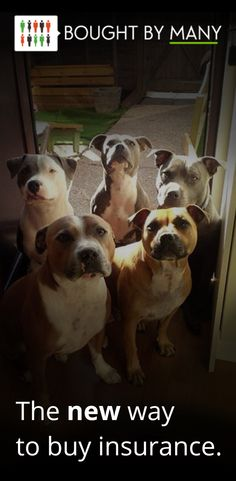 Find out why Staffie owners are loving Bought By Many.