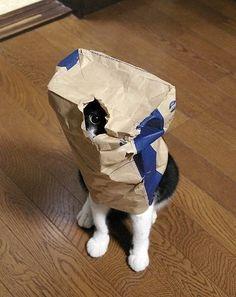 migliori-foto-gatti-067