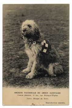 http://www.ebay.com/itm/DOG-Briard-Berger-de-Brie-War-Dog-c1915-WWI-Search-Rescue-Dog-Postcard-/161190295177