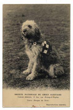 http://www.ebay.com/itm/DOG-Briard-Berger-de-Brie-War-Dog-c1915-WWI-Search-Rescue-Dog-Postcard-/161190295177