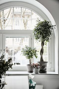 Plants on the windowsill in an elegant Swedish apartment in shades of grey. Entrance.