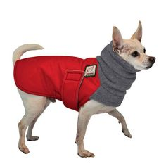 Chihuahua Dog Winter Coat Red Coat With Grey Hood Yellow Coat Blue Coats