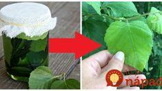 Každú jar natrhám hrsť brezových listov a dám do pohára s olejom: Poklad do každej rodiny – kto skúsi, nedá ho z ruky! Gardening, Lawn And Garden, Horticulture